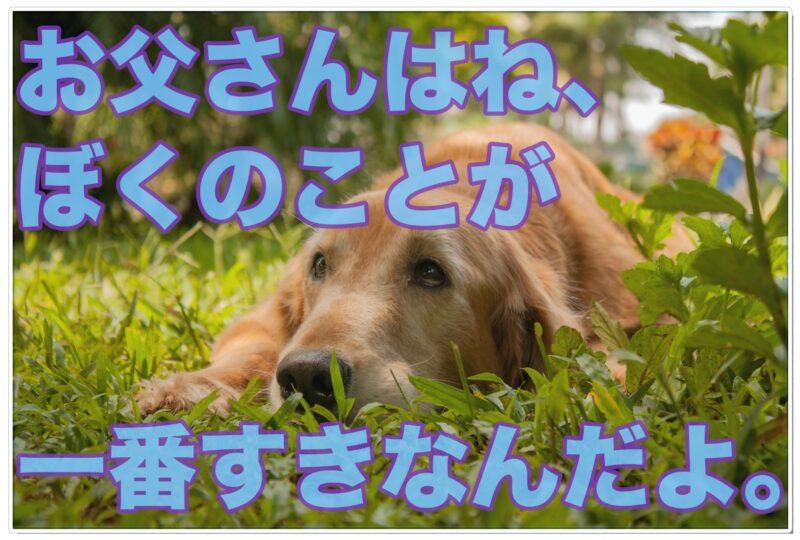 ぼくのパパは芸能人【志村けん】さんの愛犬はどんな子?
