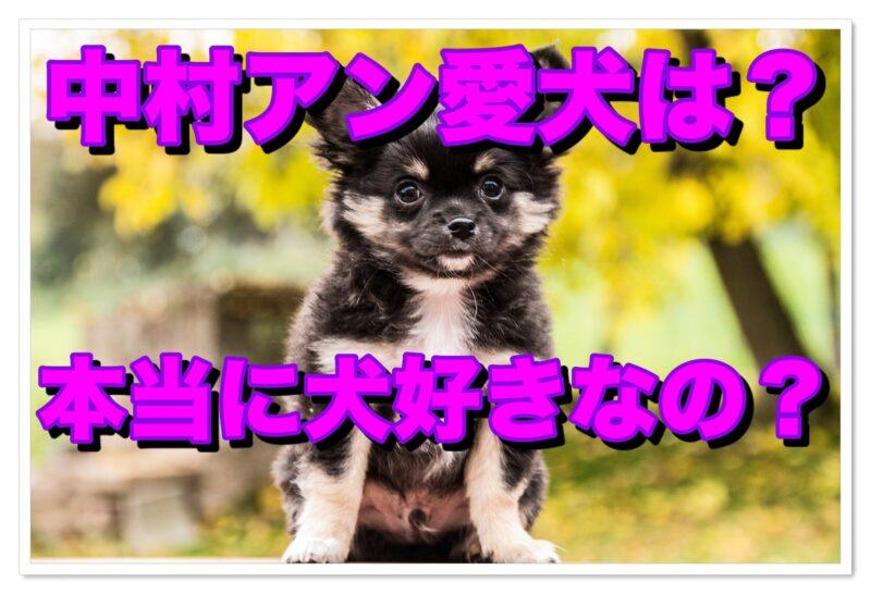 【中村アン】愛犬はこの子!|真実は残酷|愛犬家じゃなかった?