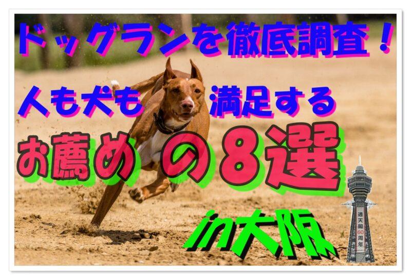 ドッグラン徹底調査【大阪編】人も犬も満足するお薦め8選