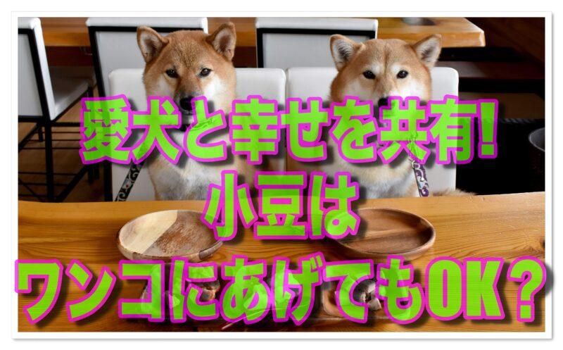 愛犬と一緒に食べたい!「小豆」はわが子にあげてもOK?