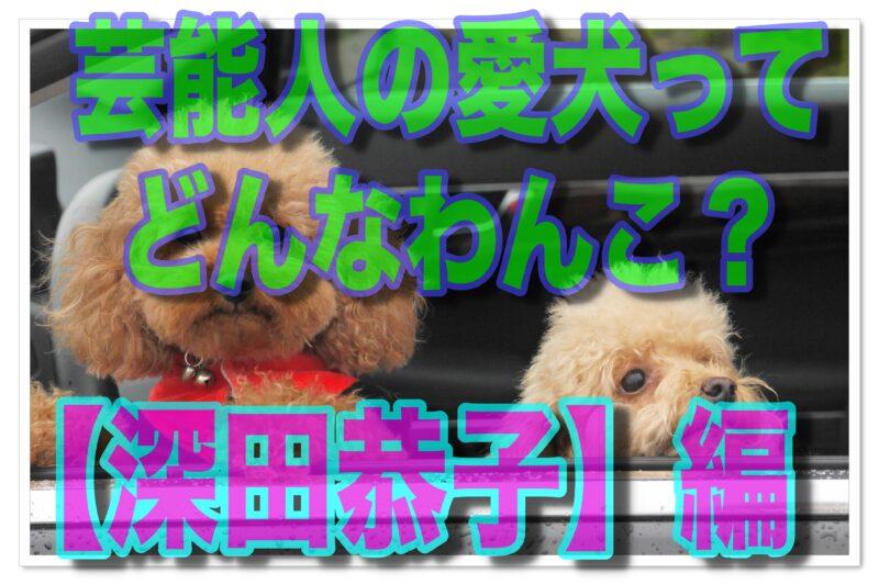 芸能人の愛犬ってどんな子?深田恭子と愛犬の素敵ライフ!