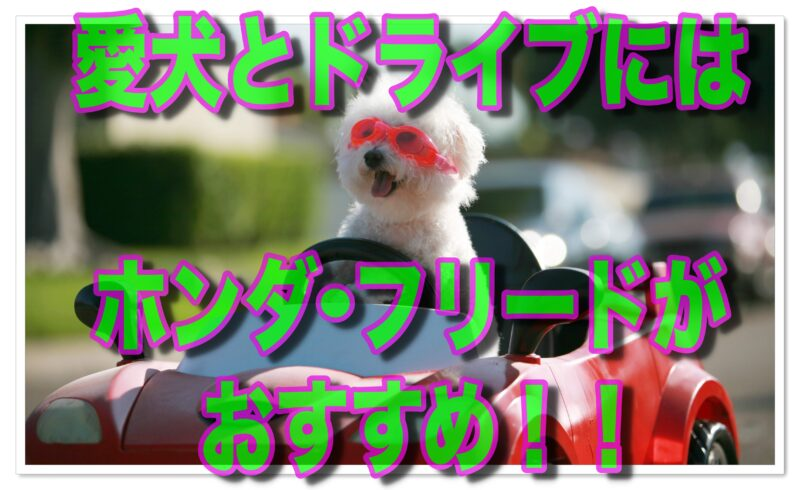 犬とドライブするならこの車がおすすめ!ホンダ・フリード