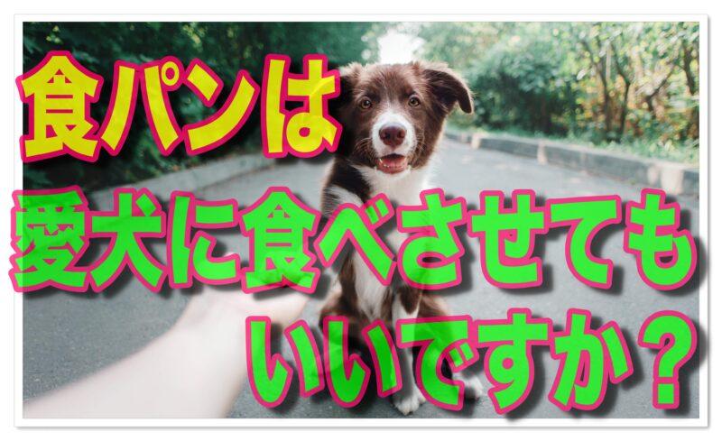食パンは犬が食べても平気?注意点とおすすめの犬用パン