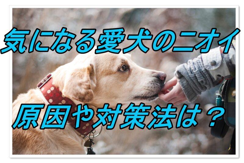 気になる犬の臭いは消せる!?【臭いの原因と対策法】
