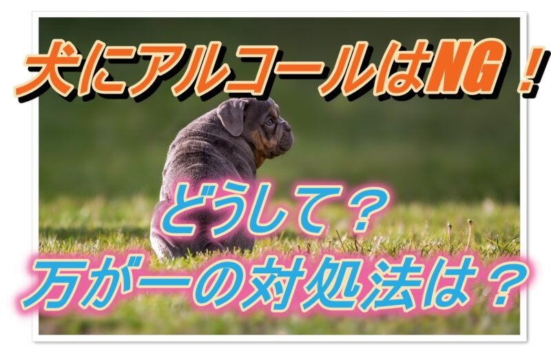 犬にアルコールはNG!知っておくべきその理由や対処法!