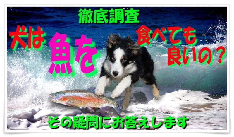 犬は魚を食べても良いの?疑問や注意点について詳しく解説