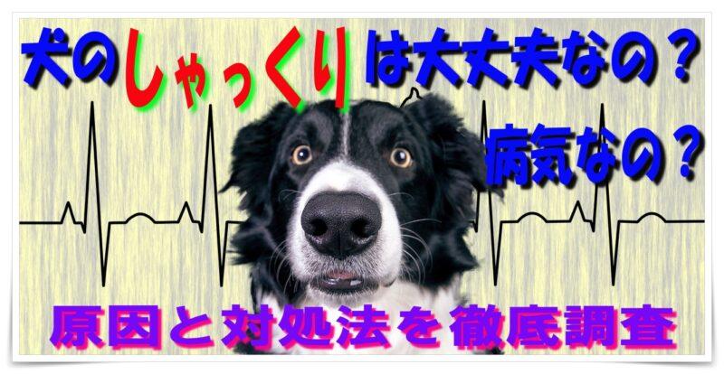 犬のしゃっくりは大丈夫?病気?原因と対処法を詳しく解説