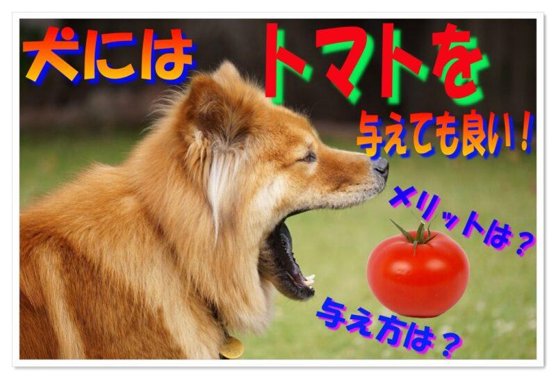 犬にはトマトを与えても良い!メリットやルールを徹底調査