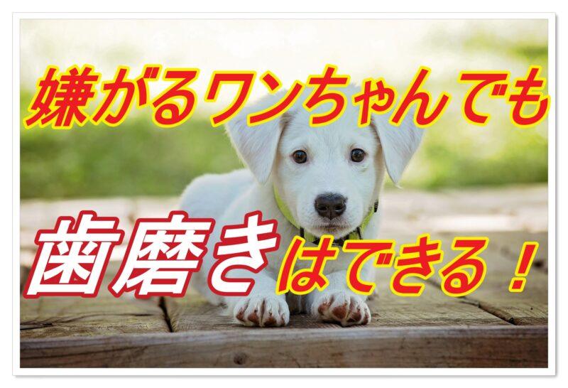 嫌がる犬でも歯磨きはできるようになる!実践6steps
