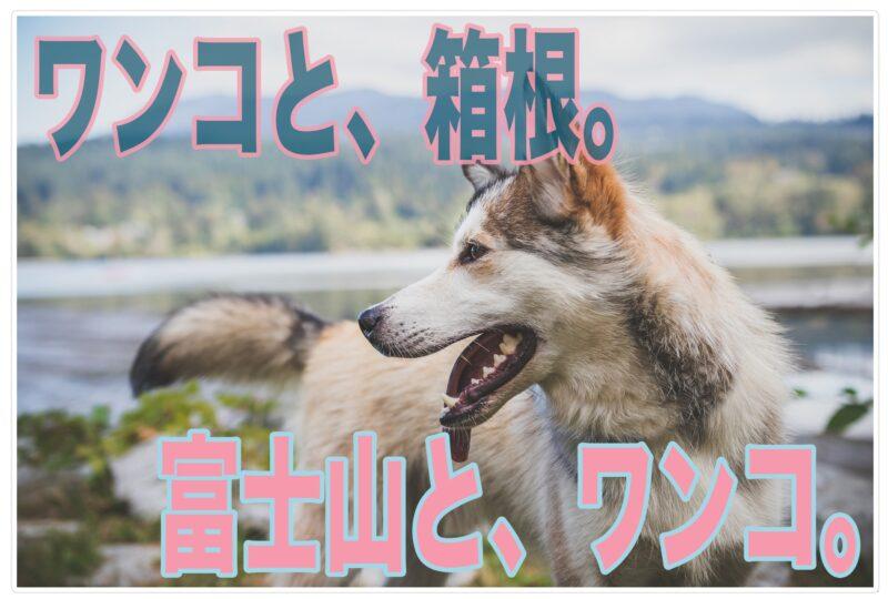 絶景!富士山が見えるドッグラン【箱根】