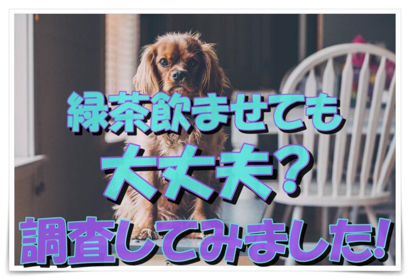 犬に緑茶を飲ませて大丈夫?疑問について調査してみました!