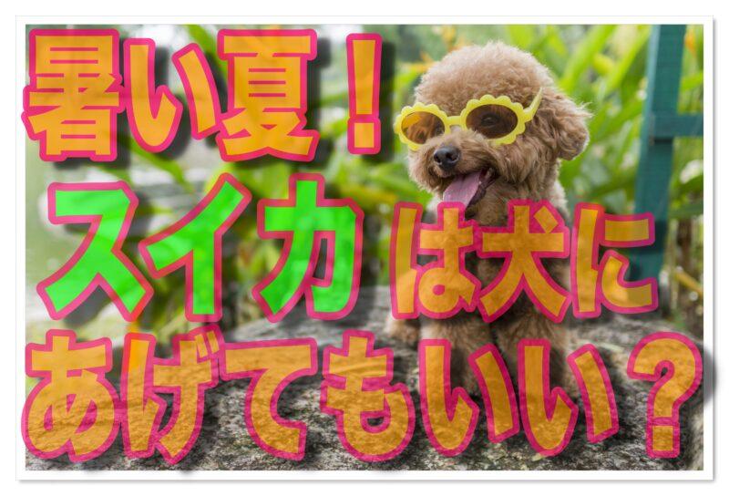 暑い夏!愛犬にスイカを与えてもいい?その注意点とは?