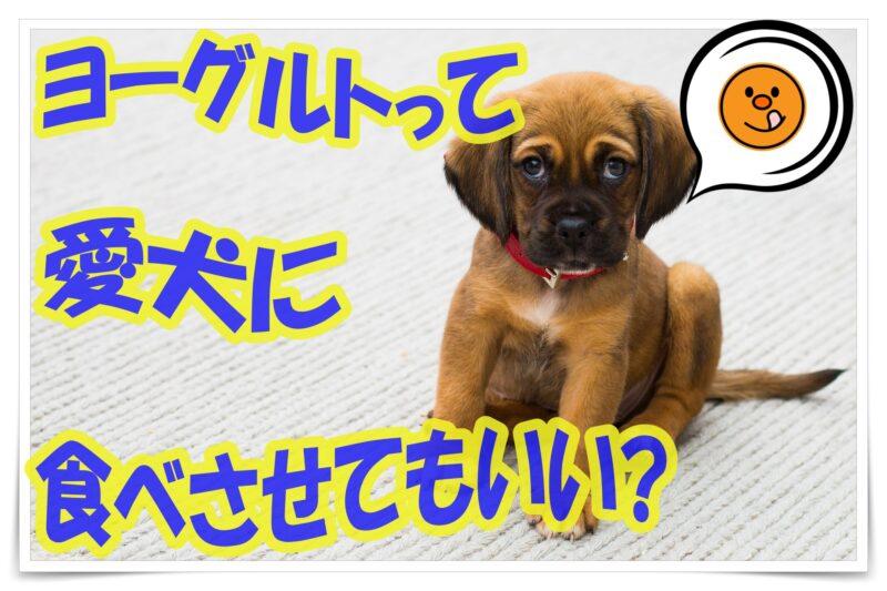 ヨーグルトって愛犬に食べさせてもいいの?注意点・効能