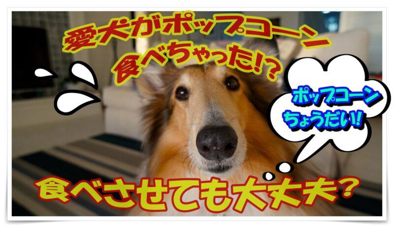 愛犬がポップコーン食べちゃった!?食べさせても大丈夫?