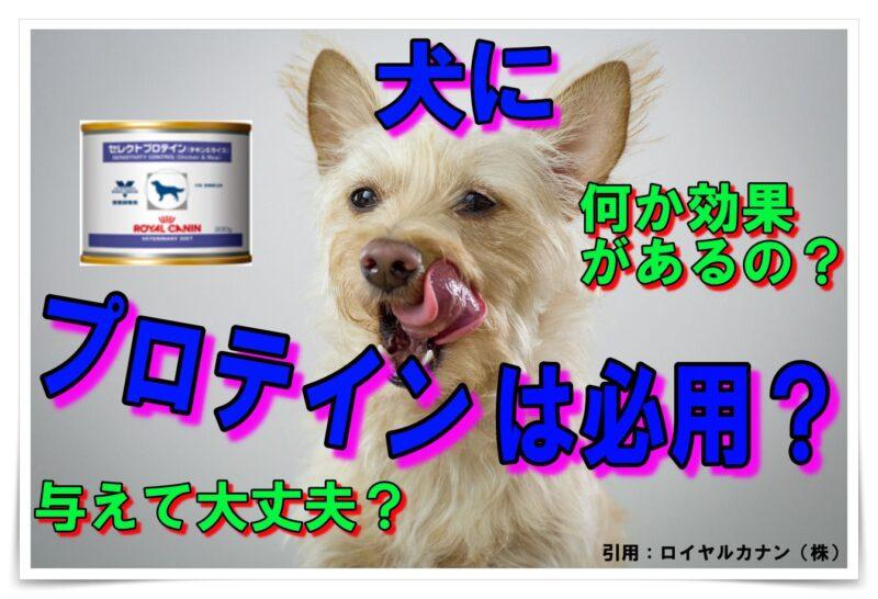 犬にプロテインは必要なの?効果や注意する事はあるの?