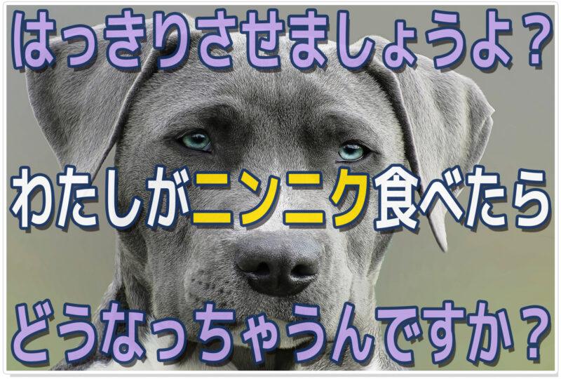 犬にニンニク食べさせて|イイ説・キケン説|賛否両論ここに終焉