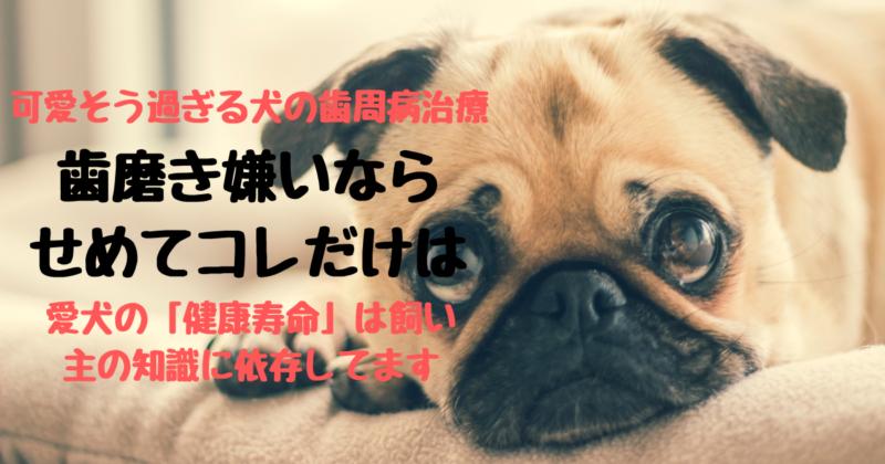 犬の歯磨きは不要なんて嘘!飼い主の無知が犬の寿命を大きく左右してます