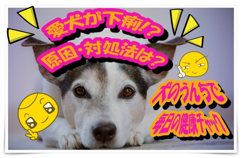 愛犬が下痢してた!?|血便・黒い便・下痢|原因と対処法|
