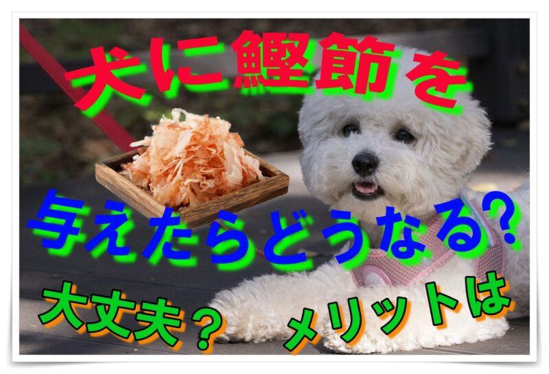犬に鰹節を与えたらどうなるの?良い点や注意点は有るの?