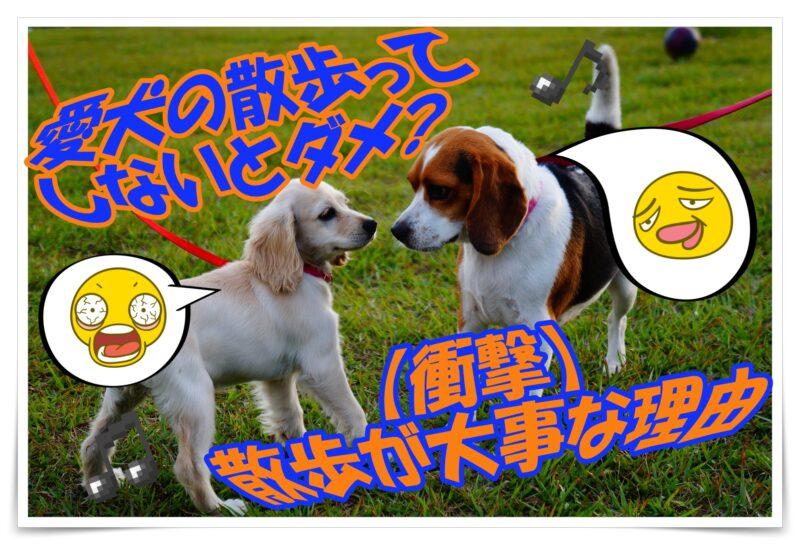 愛犬の散歩ってしないとダメ?【衝撃】散歩不足による犬の病気リスク