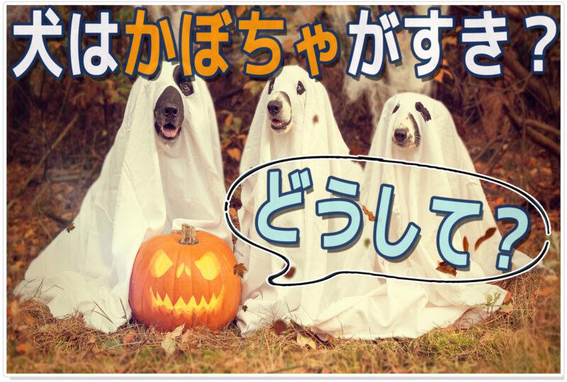 犬は「かぼちゃ」好きってホント? 栄養・注意点・レシピ