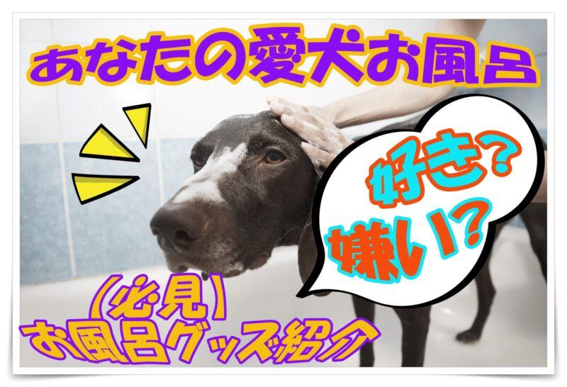 あなたの愛犬お風呂好き?嫌い?【必見】お風呂グッズ紹介