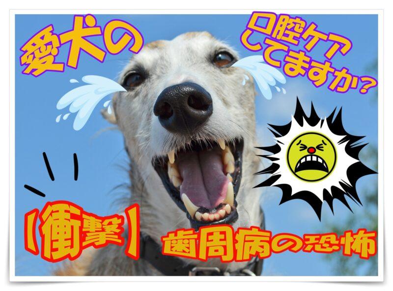 愛犬の口腔内ケアしてますか?【衝撃】歯周病の恐怖