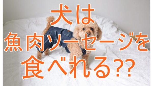 犬に魚肉ソーセージをあげてもいい?注意点と犬用ソーセージについても解説!