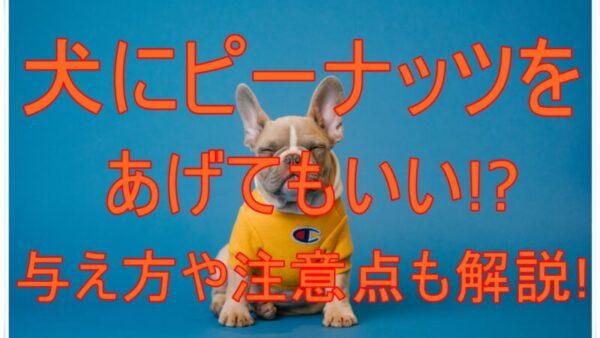 犬にピーナッツをあげても大丈夫?与え方と注意点も解説!手順もあります