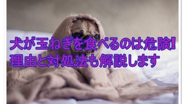 犬が玉ねぎを食べるのは危険!理由と対処法|対策法もお伝えします