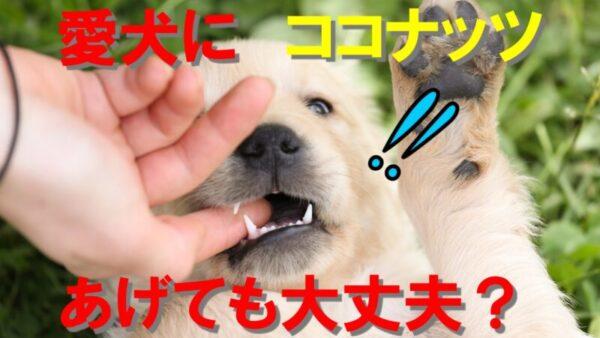 【必見】愛犬にココナッツオイルを与えても大丈夫?最新のトレンド教えます