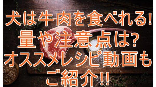 犬に牛肉をあげても大丈夫!与える量やレシピ動画、注意点もご紹介します!