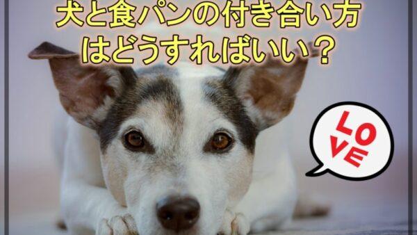 犬に食パンを与えても大丈夫?食パンから関連グッズまで調べました!