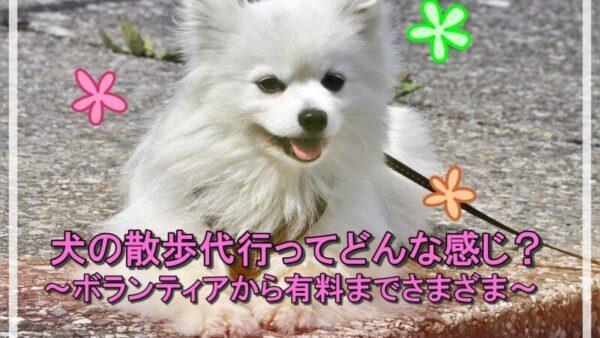 【必見】ボランティアから有料まであるけど犬の散歩代行ってどんな感じ?