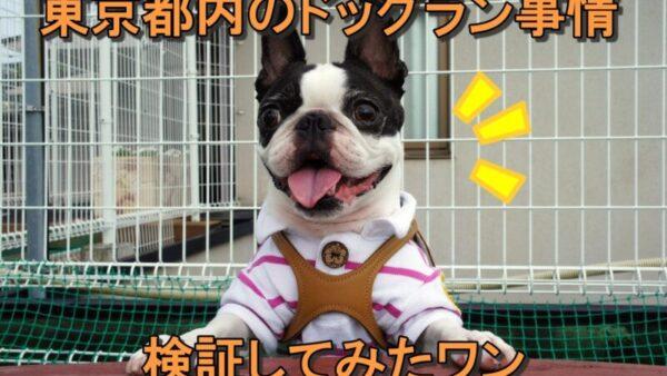 雨の季節にぴったり!東京都内の室内ドッグランで飼い犬の運動不足を解消しよう