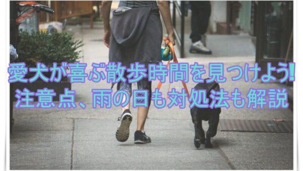 愛犬が喜ぶ散歩時間を見つけよう!注意点、雨の日の対処法も解説してます