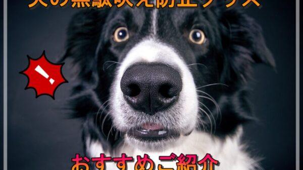 犬の無駄吠えを防止グッズって実際のところ効果ある?実態調査しました!