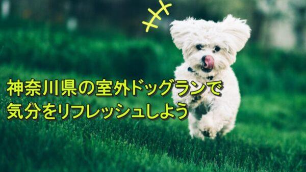 神奈川県の広い室外ドッグランで犬と遊びませんか?おすすめ7選