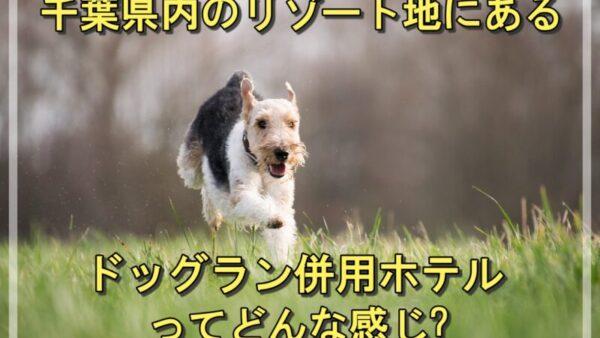 千葉県内のリゾート地にあるドッグラン併用ホテルで愛犬と一緒に過ごそう♪