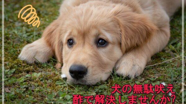 犬に酢を使って無駄吠えを治す方法は効果ある?検証してみました