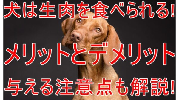 犬は生肉を食べられる!狂暴になるって本当!?与える際の注意点も解説します!